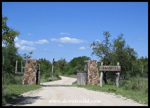 Tamboti Tented Camp