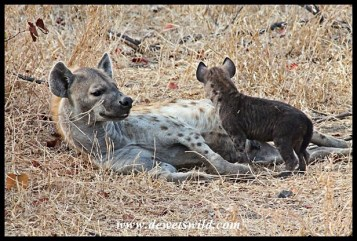 Hyenas at their den just outside Letaba
