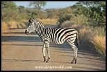 Zebra, Girivana