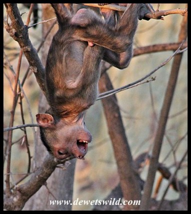 Shingwedzi jungle-gym