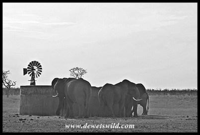 Elephants at Mooiplaas