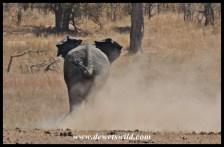 Elephant mayhem at Mooiplaas