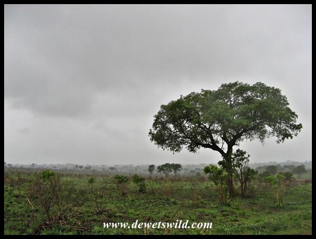 KrugerNP_Nov14 (1)
