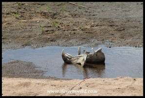 Life and death in the Sabie