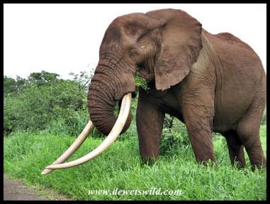 Masbambela (of Kruger)