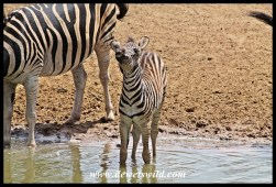 New to the waterhole