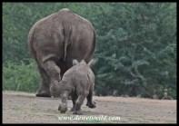 Catch me mom!