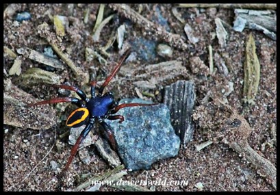Colourful spider