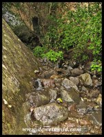Small mountain stream flowing through the ravine