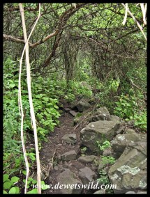 The vegetation gets denser as the ravine's walls come closer