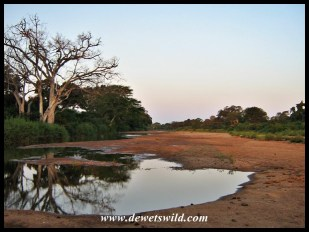 Fleeting beauty along the Shingwedzi
