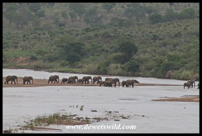 Elephants crossing the White Umfolozi