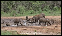 Warthog family spa treatment
