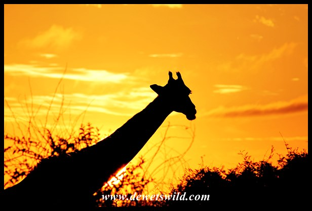 Kruger sunrise (1)