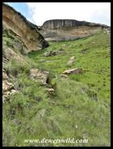 Scenery along the Mushroom Rock trail