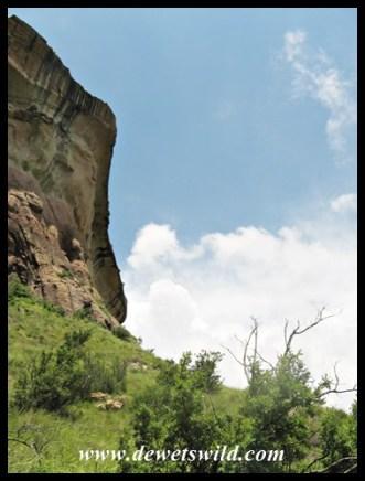 Looking up at the Mushroom Rocks