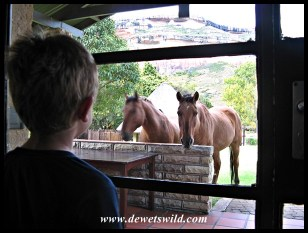 Joubert de Wet, Horse Whisperer