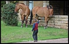 4 Years old: April 2014. Joubert de Wet, Horse Whisperer, at Golden Gate Highlands National Park