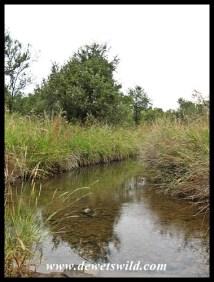 Tranquility in Loskop Dam Nature Reserve