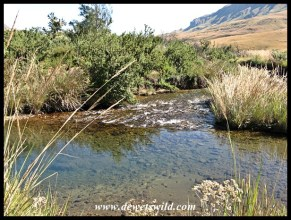 Clear pool in the Mooi River