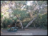 Mission Rocks picnic spot