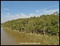 Mangrove stand