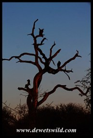 Early morning in Kruger