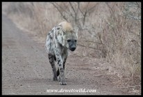 Hyena on the S29 to Mlondozii