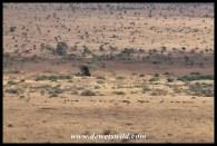 A herd of wildebeest seen from Nkumbe