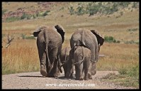 On the road in Pilanesberg National Park