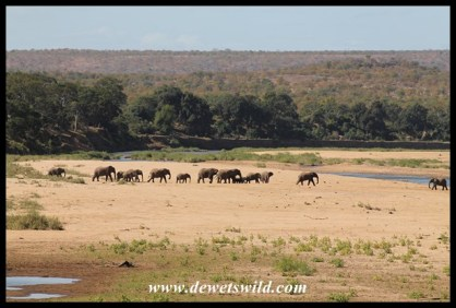 Crossing the wide, sandy Letaba River