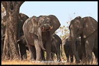 A tusk can be a useful resting place for a tired trunk