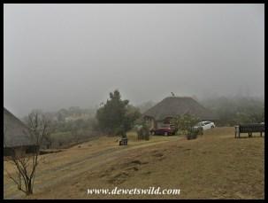Misty Thendele