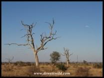 Sweni scenery