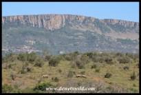 White rhinos dwarfed by Ithala's grandeur