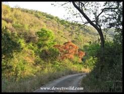 Dense vegetation along the Dakaneni Loop