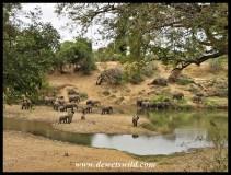Elephant herd in the Shingwedzi