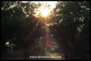 Sunrise next to the Mphongolo River