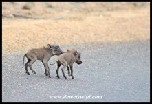 Two tiny warthogs in a big, scary world