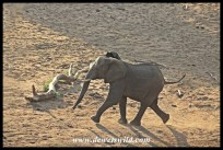 Waterhole rivalry (5)