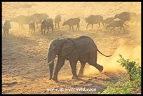 Waterhole meeting