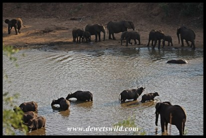 Waterhole rivalry (9)