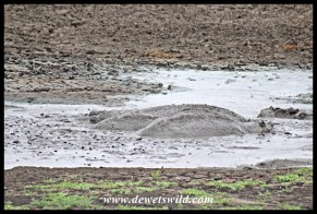 Mazithi Dam was little more than a drying mud puddle crammed with tired hippos and flayling barbel