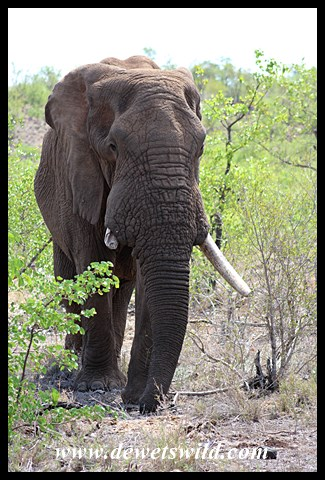 Here elephants have right of way!