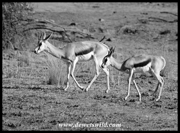 Pilanesberg 29122015 (6)