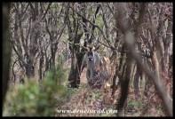 Hidden eland