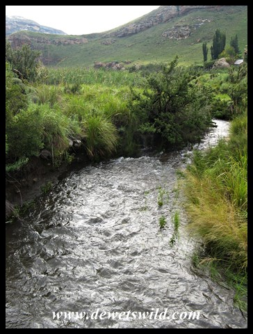 Mountain stream in full flow following the previous day's good rains