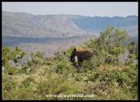 Elephant on a rocky outcrop