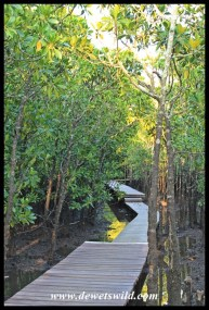 Mangrove boardwalk at Umlalazi