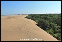 The line where the dune forest meets the beach